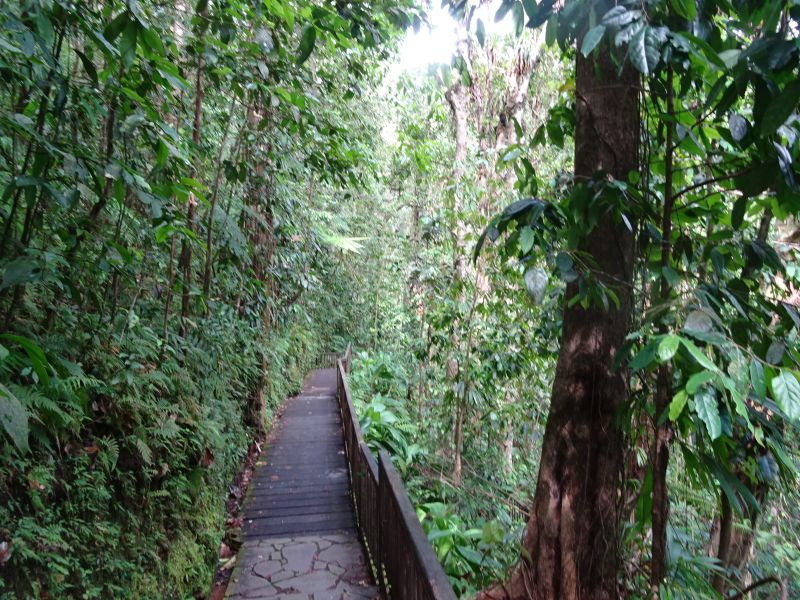116 Guadaloupe - Path to Cabret Waterfalls